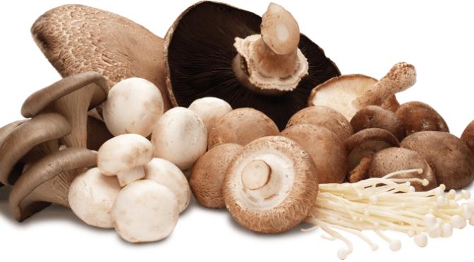 Workshop de identificação de cogumelos